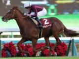 【京都大賞典 出走馬決定順】久々の長距離馬3頭などフルゲート18頭が登録
