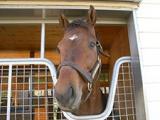 【JRA】新種牡馬ミュゼスルタンの産駒が初勝利 東京1RでユングヴィがV、鞍上は父の主戦・柴田善臣騎手