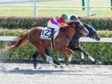 【東京4R新馬戦結果】8番人気レオカクテルが競り合いを制す