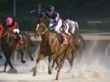 【地方競馬】タガノゴールドの献花台を設置、北國王冠のレース後に死亡 2019年の兵庫年度代表馬、重賞8勝