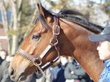 【海外競馬】ミッキーアイル産駒が豪2歳セール最高価格の50万豪ドルで落札