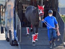 【ジャパンC】コントレイルが帰厩 矢作師、現役最強馬との対戦に胸ワクワク