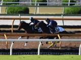 ダノンザキッド、東京スポーツ杯2歳S1週前追い切り速報/栗東トレセンニュース