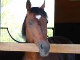 新種牡馬ダノンシャークの産駒がJRA初勝利 タイキドミニオンが初ダートで2.1/2馬身差V