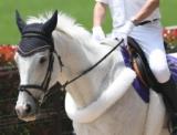 【地方競馬】JRA・GIで誘導馬を務めてきたストラディヴァリオが園田競馬場に移籍