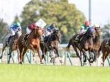 【ラジオNIKKEI杯京都2歳S】登録馬 ラーゴム、ワンダフルタウンなど11頭