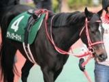 【中日新聞杯展望】前走で凡走した馬が巻き返してくるレース