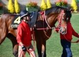 【朝日杯FS】ピンクカメハメハとマーチリリーは同週の別レースに 武豊騎手ドゥラモンドら16頭確定