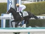 【阪神6R新馬戦結果】ペプチドサンライズが8馬身差で圧勝