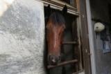 【地方競馬】ブルドッグボス引退、種牡馬入り! 小久保調教師「子供たちにもぜひ携わってみたいです」