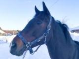 オールブラッシュ、青森で種牡馬に「貴重な血、大切にしていきたい」