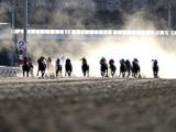【地方競馬】大井競馬は今後の3開催において無観客競馬を実施