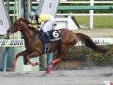 ドンフォルティス競走馬登録抹消、地方競馬に移籍へ