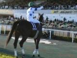 【海外競馬】チュウワウィザードがサウジCの招待受諾、同日スプリントの3頭も受諾