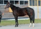 サイモンラムセスが種牡馬としてファーストシーズンへ 父はブラックタイド、半妹にオパールムーン