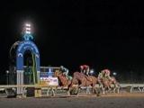 【地方競馬】高知競馬がまたも1日の売上レコードを更新、1開催のレコードも約24億円更新