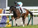 【京都牝馬S】登録馬 シャインガーネット、ギルデッドミラーなど17頭