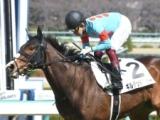 【京都牝馬S見どころ】混戦模様の牝馬限定戦にギルデッドミラーらが出走