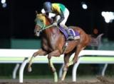 【大井・金盃】11歳馬サウンドトゥルーの3連覇なるか/レースの見どころ(地方競馬)