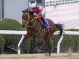 【次走】9馬身差圧勝のクリンチャーは名古屋大賞典へ