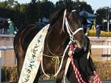 【サウジC】米国馬シャーラタンが1番人気、日本馬チュウワウィザードは5番人気タイ/ブックメーカー・オッズ