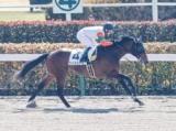 【東京3R新馬戦結果】ヴィントミューレが5馬身差圧勝