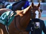 【チューリップ賞】テンハッピーローズ「脚をためる競馬が良さそう」/馬三郎のつぶやき