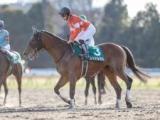 【海外競馬】レッドルゼルはドバイゴールデンシャヒーンの招待受諾、鞍上はR.ムーア騎手