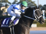 【ドバイワールドC出走予定馬】日本のチュウワウィザード、アメリカのミスティックガイドなど