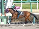 【韓国馬事会杯】(中山) ラチ沿いからポジションを上げていったマサハヤニースが直線逃げ馬を捉えて突き放す
