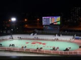 【地方競馬】大井競馬場が4月12日から入場再開 指定席523人・一般席750人