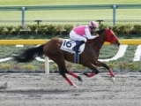 【ゴドルフィンマイル】日本のデュードヴァンは大外15番ゲートから 鞍上はデットーリ騎手