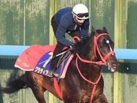 【皐月賞】グラティアス最少キャリアVだ M・デムーロが2戦2勝の素質馬導く