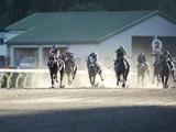 5月3日の地方競馬は7場開催、全81レースの発走順