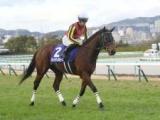 JRAはGI・NHKマイルC、地方はJpnI・かしわ記念に注目/今週の競馬界の見どころ