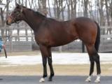 【POG】「ただ者ではない雰囲気」超高額馬リアドが函館に入厩中/馬三郎のつぶやき