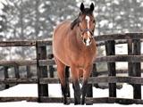 【地方競馬】新種牡馬ディーマジェスティ、ポアゾンブラックの産駒が初勝利