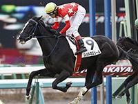 引退馬協会が新たにマンダララを受け入れ「ナイスネイチャ・33歳のバースデードネーション」の寄附金より