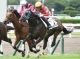 【小倉5R新馬戦結果】ベルカントの半弟サイードが人気に応え初陣飾る
