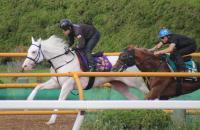 ソダシが入厩後2本目の時計 楽な手応えで半馬身先着 札幌記念に参戦予定