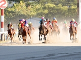 金沢競馬で新型コロナのクラスター発生、8月10日まで開催中止に 本日までに8名感染確認