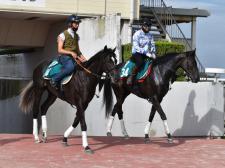 ゲート試験に合格したサンライズロナウド(左)とラスマドレス(右) (撮影日:7月28日、撮影:井内利彰)