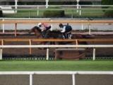 母はクイーンC勝ち馬、アドマイヤラヴィが武豊騎手でデビュー/関西馬メイクデビュー情報