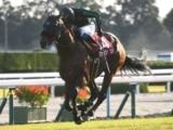 【オーバルスプリント】(浦和) JRA所属出走予定馬および補欠馬について