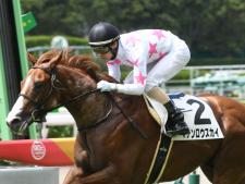 鮮やかに新馬勝ちを飾ったマテンロウスカイは25日(土)中京9Rへ出走予定(c)netkeiba.com