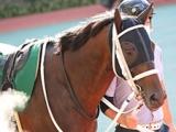 【JRA】2017年新潟大賞典覇者サンデーウィザードが引退、馬事公苑で乗馬に