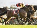 【毎日王冠結果】シュネルマイスターが鋭く追い込んで重賞2勝目!3年連続の3歳馬V
