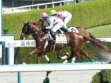 【2歳未勝利】(阪神2R) ビッグアーサーを兄に持つセキフウが初勝利