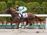 カズラポニアン宮田調教師は潜在能力を高く評価「もしかしたら想像を超える馬になるかも」/POGマル秘週報