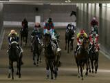 【函館6R新馬戦結果】マクフィ産駒ルーチェドーロが悠々逃げ切りレコードで圧勝